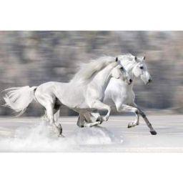 ArtzFolio Two White Horses in Winter Unframed Paper Poster